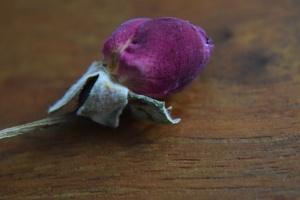 tiny-rose